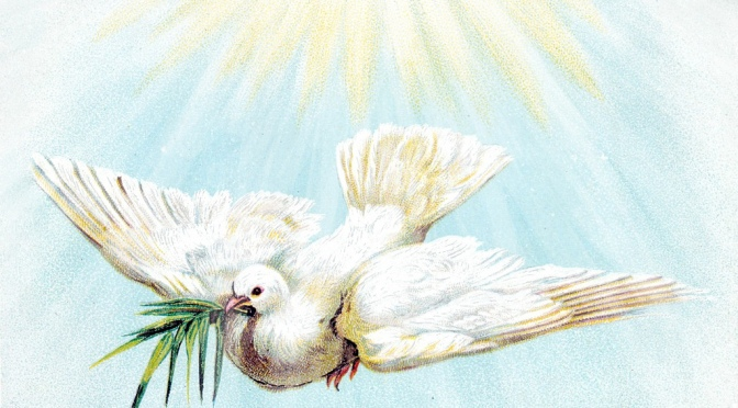 The Holy Spirit Part III: No Root, No Fruit!